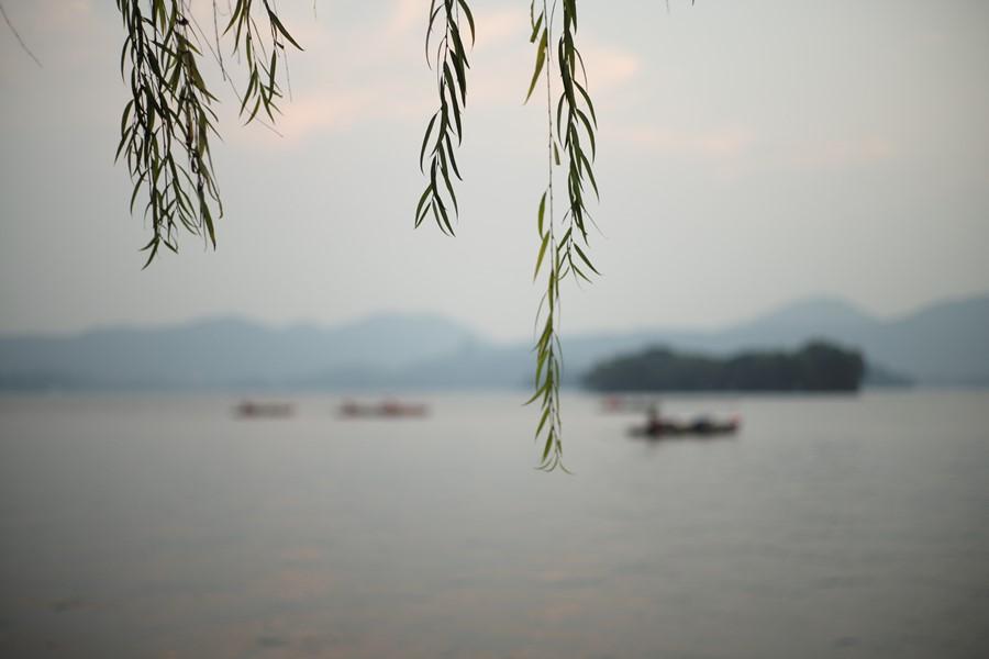 Symbolbild für Jin Shin Jyutsu bei Depressionen: Zweige hängen vor einer grau-verschwommenen Landschaft