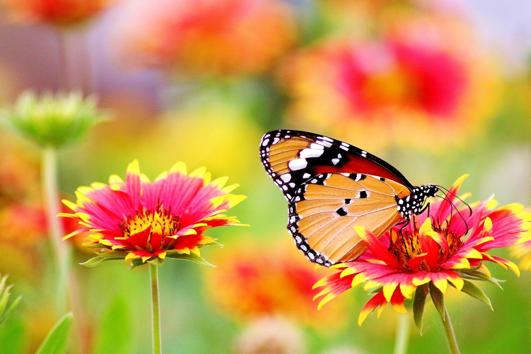 Symbolbild für Jin Shin Jyutsu Kurs abnehmen: Schmetterling auf bunter Blumenwiese