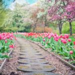 Symbolbild Jin Shin Jyutsu neue Wege finden: Weg durch pinke Tulpen