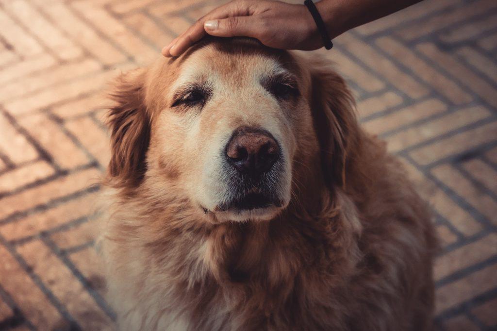 Symbolbild Jin Shin Jyutsu Tiere: Hand liegt auf dem Kopf eines Hundes